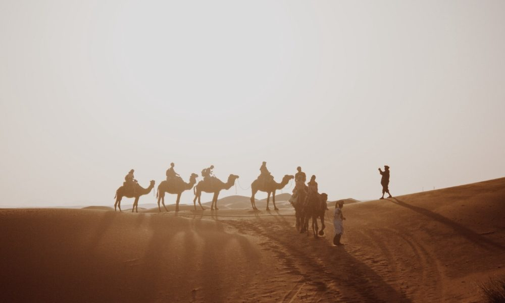 Travel to Madinah on Camel